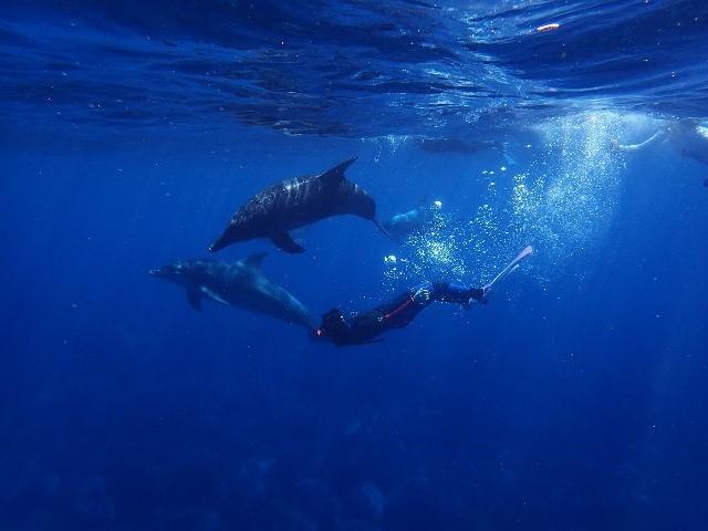 חלומות על דולפינים