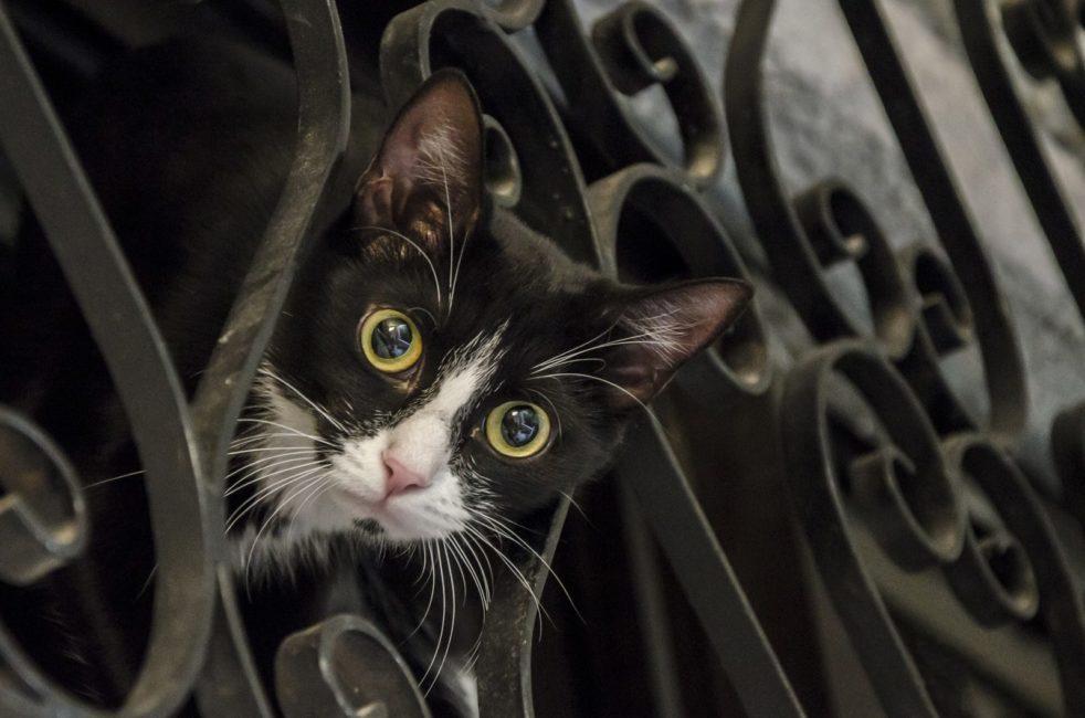 חלום על חתול וזוגיות