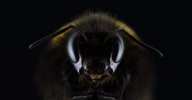 דבור עוקץ בחלום