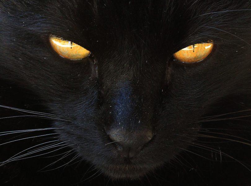 חתול שחור בחלום