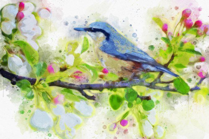 ציפור בחלומות