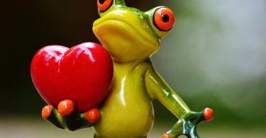 חלום על צפרדע וזוגיות
