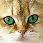 חתול בחלום