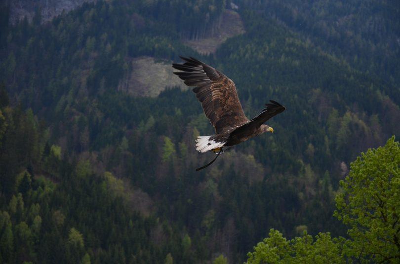 חלום על ציפור טרף