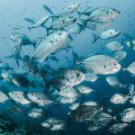 חלום על דגים