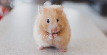 חלום על עכבר